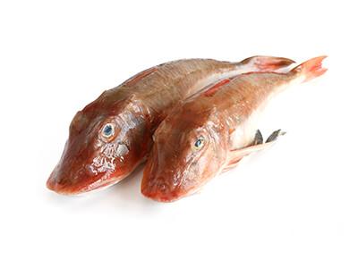 Red Gurnard, Interfish IJmuiden