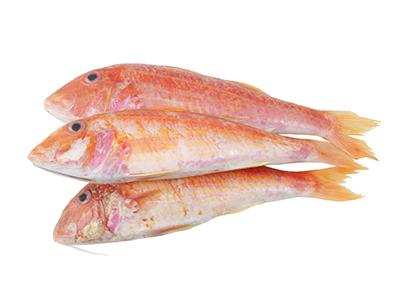 Red Mullet, Interfish IJmuiden