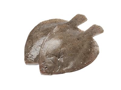 Brill Fish, Interfish IJmuiden