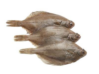 Dab Fish, Interfish IJmuiden