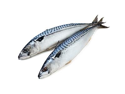 Mackerel, Interfish IJmuiden