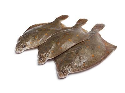 Plaice, Interfish IJmuiden