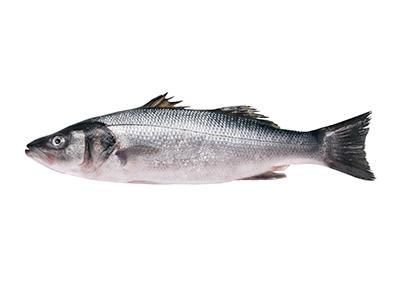 Sea Bass, Interfish IJmuiden