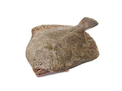Turbot, Interfish IJmuiden